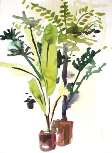 Green House Plants, private collection